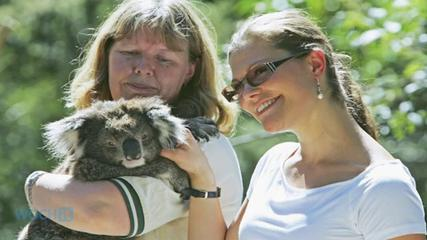 News video: This Woman Gave An Injured Koala Bear CPR And Brought Him